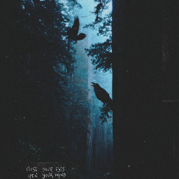 freetoedit darkness dark forest darkforest