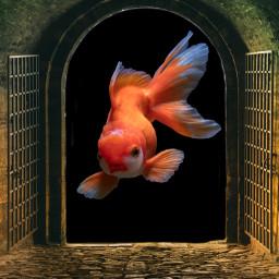 madewithpicsart imagination papicks gate door freetoedit