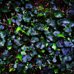 ivy nature green💕🐾🍁 green