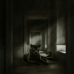 freetoedit panther dark papicks light