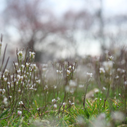 tinyflowers flowers grass meadow spring2020 freetoedit