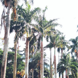 freetoedit palmtree urban