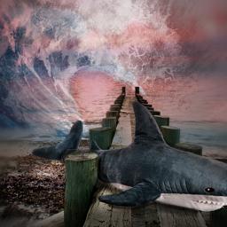 shark myedit photomanipulation freetoedit