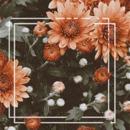 freetoedit flower orange phonebackground asthetic
