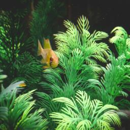 photo fish water fishtank