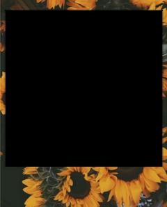 polaroid sunflower flower aesthetic interesting freetoedit
