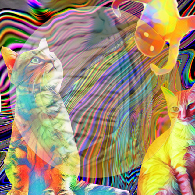 #cat #yarn #trippy #freetoedit