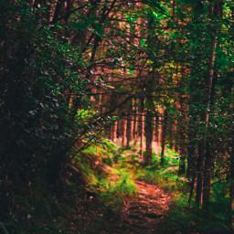 forest nature naturephotography photography trees freetoedit