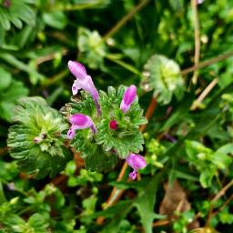 tinyflowers springflowers naturephotography