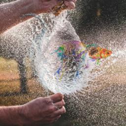 freetoedit fromthemindof challengesticker splash goldfish srcsplash