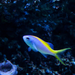 freetoedit photography fish sealife aquarium