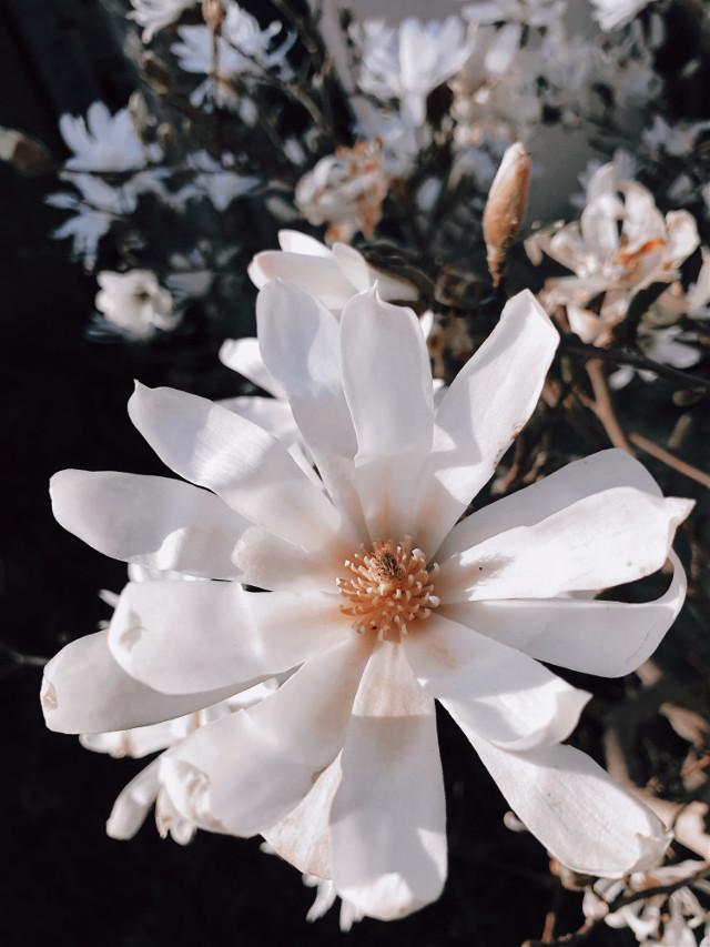 Morning 🌸 #interesting #flower #flowers #photography #nature #freetoedit