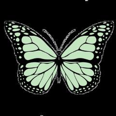butterfly butterflys green spring aesthetic freetoedit