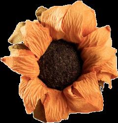sunflower freetoedit flower vintage aesthetic