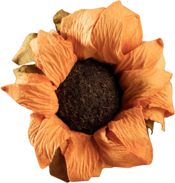 #sunflower #freetoedit #flower #vintage #aesthetic #retro #yellow #yellowaesthetic #old #interesting #moodboard #collage #sticker #freetoedit