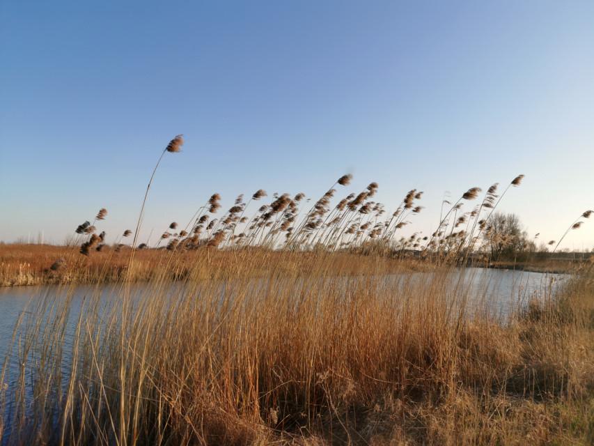 #freetoedit #nature #myphoto #grass #river #wind #springday #beautifulday