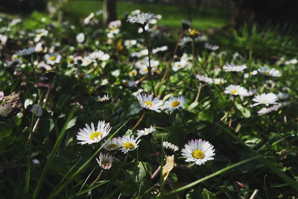 #freetoedit #photography #travel #london #sky #nature #flower