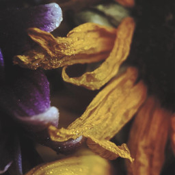 nature flowers naturesbeauty oldflowers waterdroplets freetoedit
