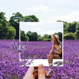freetoedit lavender lavenderflowers photoframe memories ecdreamdestinations dreamdestinations