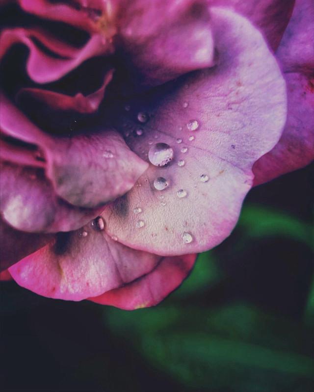 #nature #flower #naturesbeauty #waterdroplets #closeupflower #naturephotography   #freetoedit