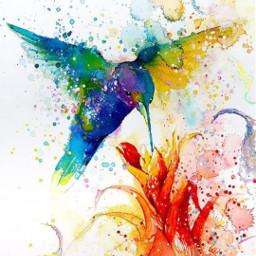 freetoedit bird colorsplash colors hummingbird srcsplash splash