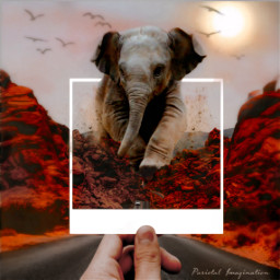 elephant surreal largeanimal dust freetoedit ecdreamdestinations dreamdestinations