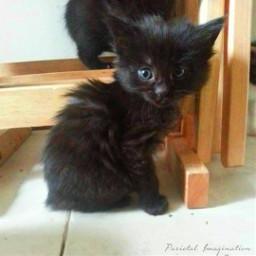 casper kitten freetoedit myphotography myphoto pcpicsartpets picsartpets createfromhome stayinspired