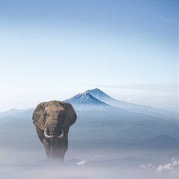 freetoedit elephant mountain nature misty