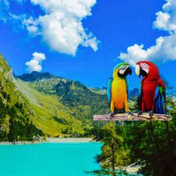 freetoedit birdsenjoyingaview