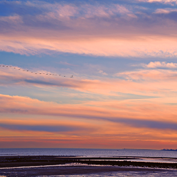 freetoedit outdoorphotography oceanview skylovers birds