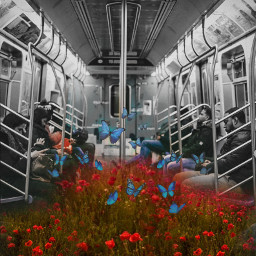 freetoedit poppyflower metro peoples field