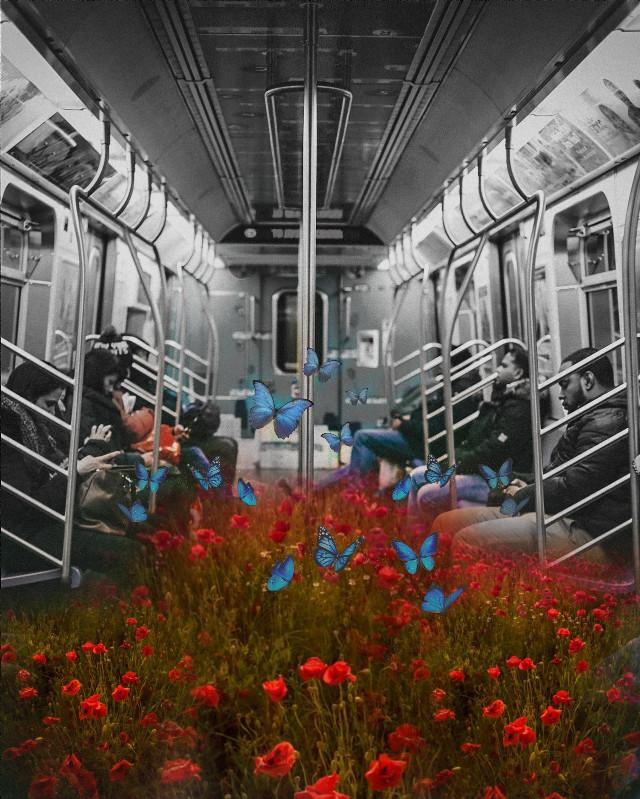 #freetoedit #poppyflower #metro #peoples #field #butterfly