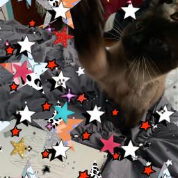 starcat freetoedit srcaestheticstars aestheticstars createfromhome stayinspired