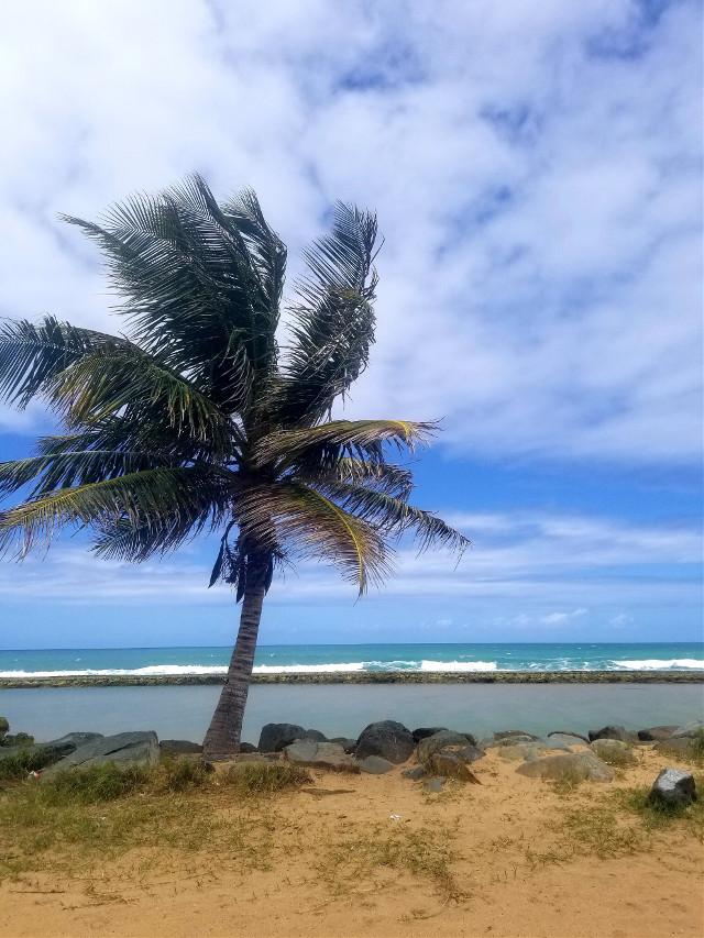 Have a nice Sunday #myphotography #beach #naturephotography #myhometown #nature #freetoedit