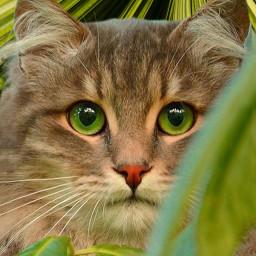 cat cats pets petsandanimals green