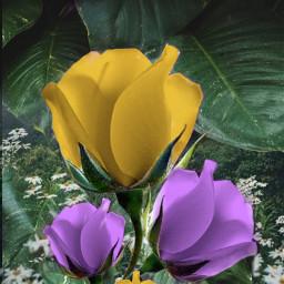 freetoedit flowers purple yellow myedit