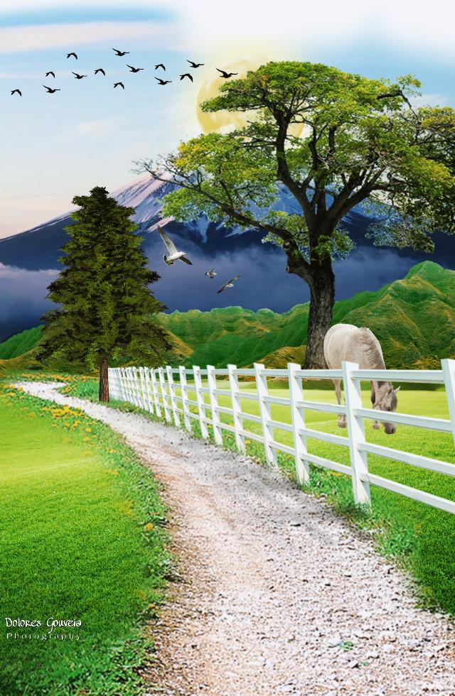 #freetoedit #landscape #pastures #road#mountain #fence