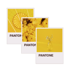 freetoedit remixit pantone yellow flowers