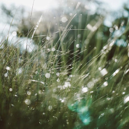 nature grass morningdew waterdroplets bokeh freetoedit
