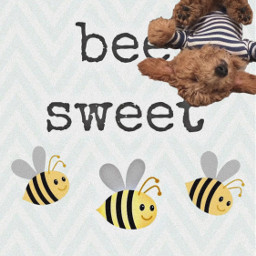 freetoedit bee bees puppy beesweet