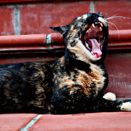 loveunala mylife❤ reallyreallyloveu mytiger roar