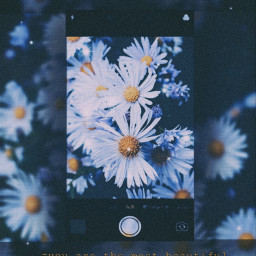 freetoedit springday flowers vsco aesthetic