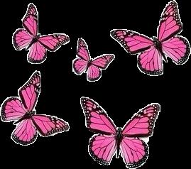 butterfly pinkbutterfly pink pinkaesthetic aesthetic freetoedit