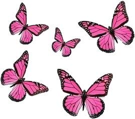 #butterfly #pinkbutterfly #pink #pinkaesthetic #aesthetic #soft #freetoedit