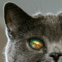 freetoedit cat cats kittylove coolcat