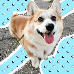 freetoedit dog vscodog vscosquiggle vscostars