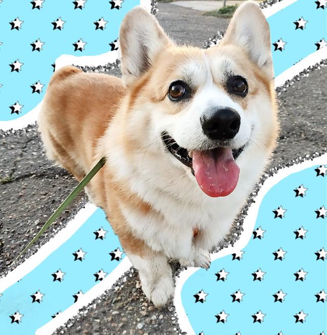 #freetoedit #dog #vscodog #vscosquiggle #vscostars #vsco
