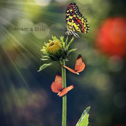 photoedit photomanipulation blossoming sunflower freetoedit