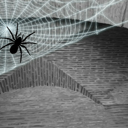 freetoedit spider oldwall oilpaintingeffect maskeffects