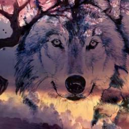 freetoedit wolf clouds sky myedit